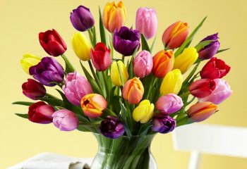 tulips-thumb-new1